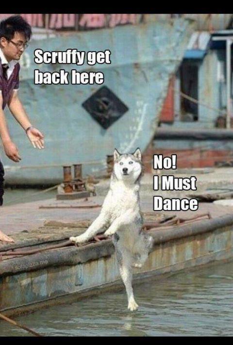 Dance fido dance
